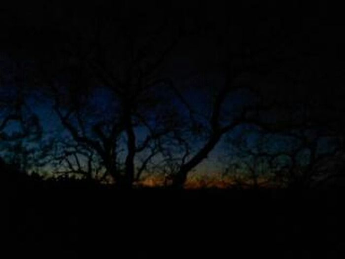 Another one off my old phone no effects Sunset Trees Throwback Thursday No Filters Or Effects Old Phone Photo