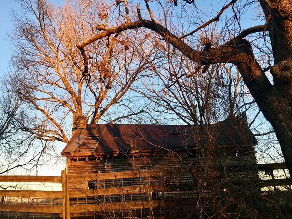 Abandoned Bare Tree Golden Hour Farmhouse Built Structure Building Exterior Day Outdoors Clear Sky Sky Nature