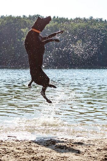 Man jumping on sea against sky