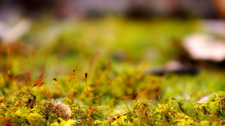 Focus On Foreground Forest Floor Fragility Freshness Green Color Growing Growth Moss Mossporn Nature Outdoors Selective Focus