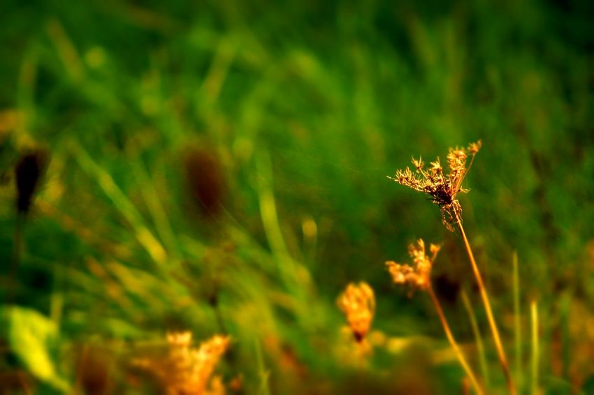 Nature Flower Plant Insect Fragility No People Outdoors Growth Uncultivated Beauty In Nature Close-up One Animal Green Color Grass Animal Wildlife Sunset Butterfly - Insect Nature Reserve Animals In The Wild Day Green Color Beauty Multi Colored EyeEm Best Shots Enjoy Sunshine  Be. Ready.