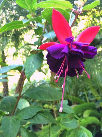 Gods glory Flower Purple Nature Garden
