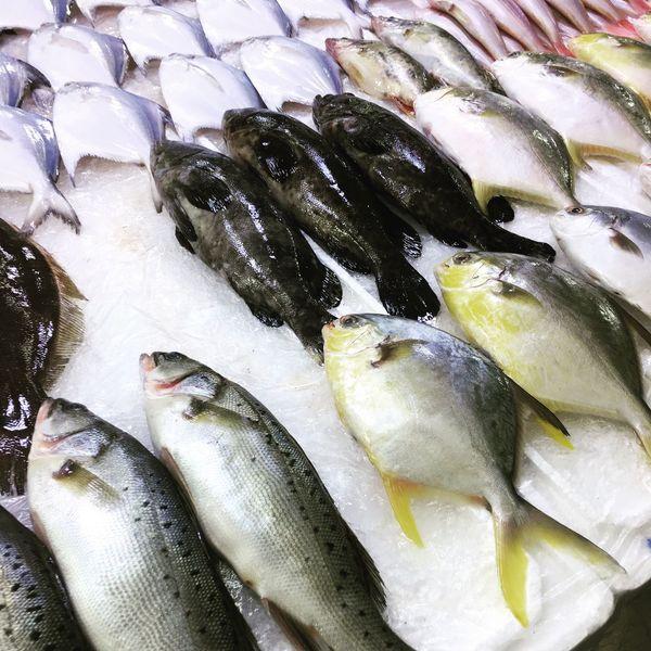 Fish Food Cold Temperature Fish Market