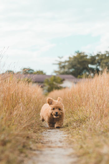 Cute brown hairy puppy running amidst plants on land