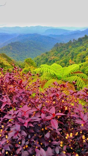 Range of Titiwangsa Nature Beauty In Nature Scenics Landscape Autumn Leaf Tranquility No People Field Outdoors Growth Mountain Day Sky Plant Tree Rural Scene Multi Colored Grass Freshness
