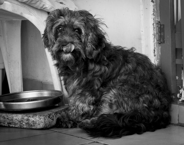 18-55mm Blackandwhite Canon 20d Dog Domestic Animals No People One Animal Pets Pet Portraits