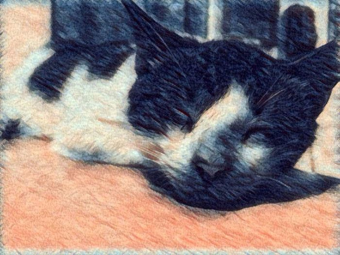 Pets Domestic Cat Myfudgee❤️ Lazycat