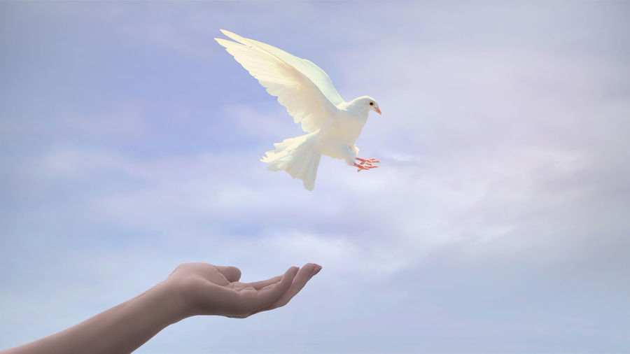 Cropped hand with white dove against sky