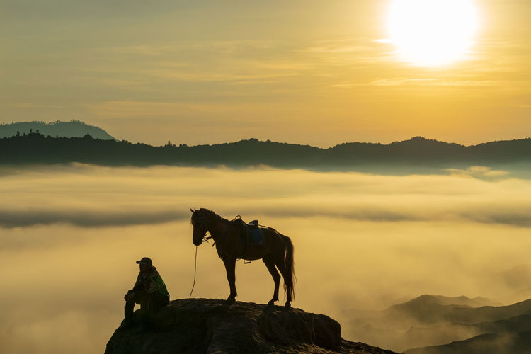 Silhouette horse on mountain against sky during sunset