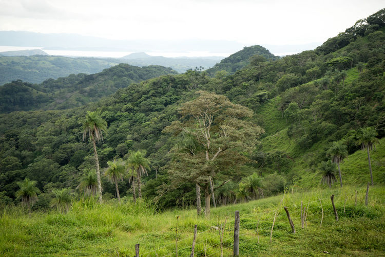 Costa Rica Beauty In Nature Forest Green Color Landscape Lush Foliage Mountain Range Nature No People Outdoors Plant Scenics