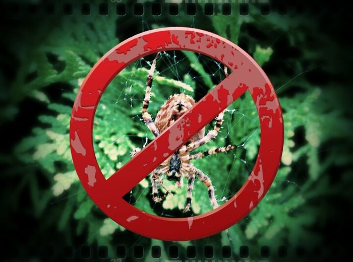 Edit This original by @kulturpunkte bearbeitet bei @FrauSchlumpf Spider Forbidden Beauty Horror In Nature
