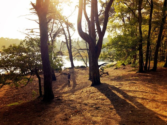 Tree Nature Outdoors Scenics Landscape Sunlight Beauty In Nature Fall Woods
