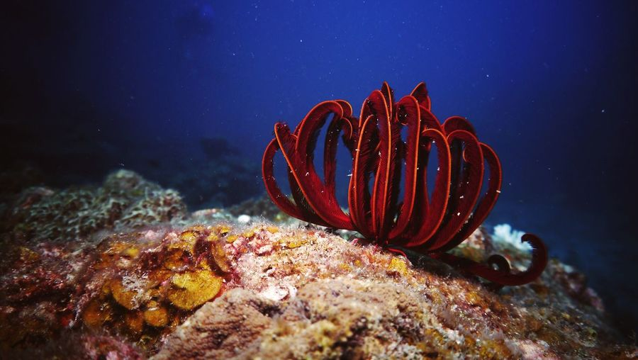 Red coral on ocean floor