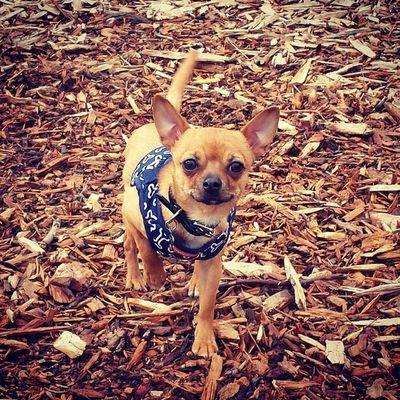 Puppy park! Crazylittledog Dailyzigga Happypup