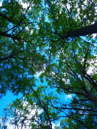 Green Color Beauty In Nature Forestwalk Sunlight Tree Branch Forest Tree Area Leaf Sky Green Color Greenery