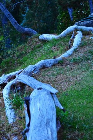 Garden Art Big Sur, Ca. Craftsmanship  Wooden Fence Taking Photos Outside My House The Great Outdoors Nature Photography Lucky Me Dusk Oceanside
