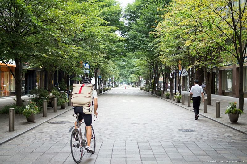 並木道 Treelined Street New Lens Streetphotography Trees Road Street Bycicle Olympus Avenue