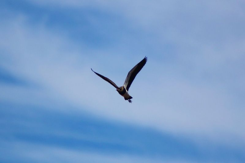 Low Angle View Of Bird Flying Against Sky