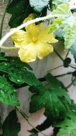 Leaf Freshness Nature Flower Plant Beauty In Nature Fragility Water