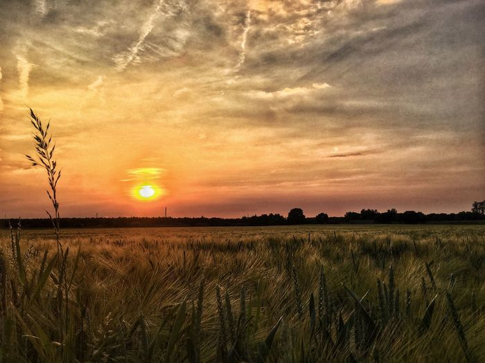 Field Fields NRW Duisburg Sunset Field Nature Tranquil Scene Beauty In Nature Sky EyeEmNewHere Tranquility Sun Landscape Agriculture Scenics Growth Cereal Plant Day Outdoors Colour Your Horizn Summer Exploratorium #FREIHEITBERLIN Summer Road Tripping My Best Travel Photo Stay Out