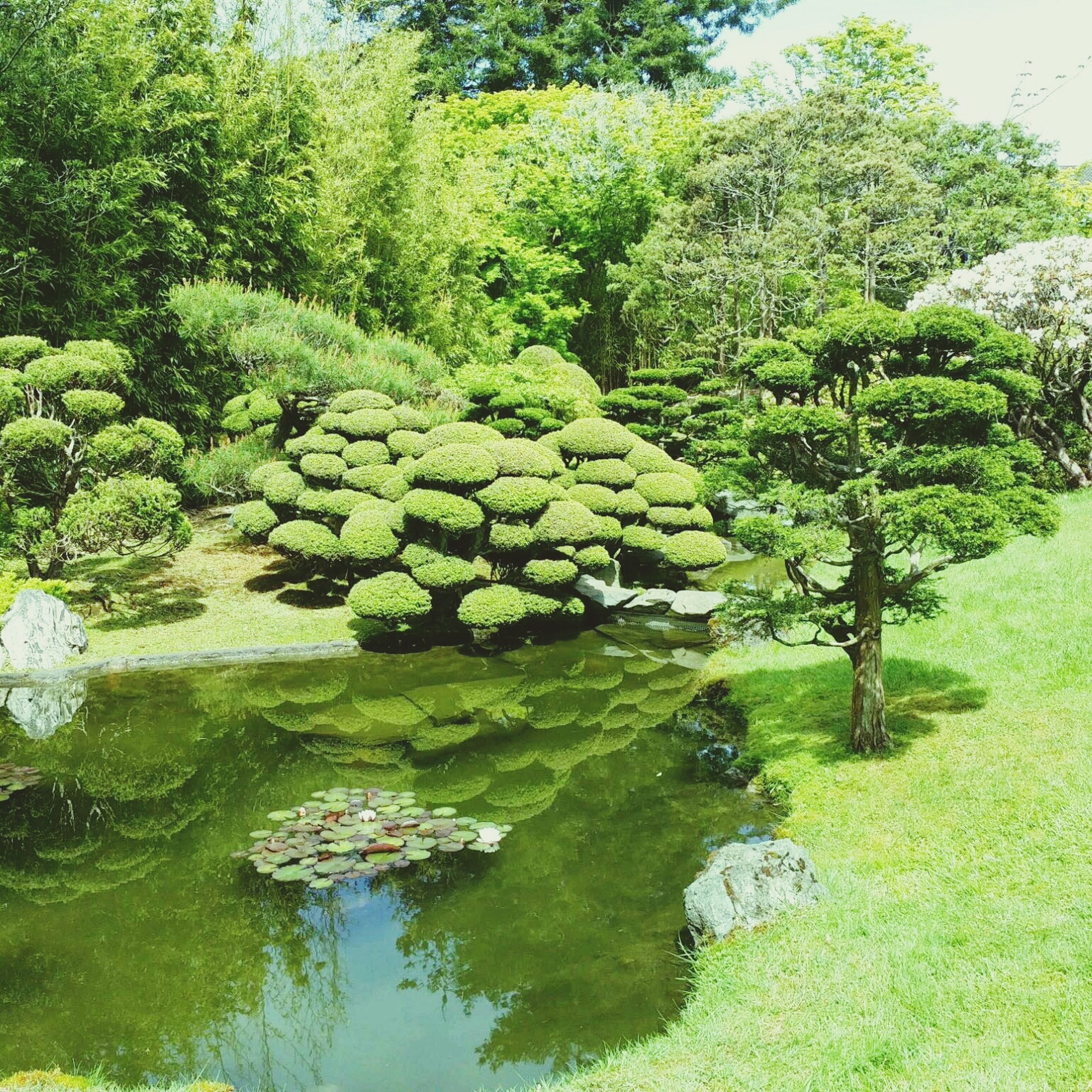 water, green color, tree, tranquility, growth, nature, tranquil scene, beauty in nature, grass, scenics, plant, green, day, pond, idyllic, rock - object, reflection, outdoors, lake, no people