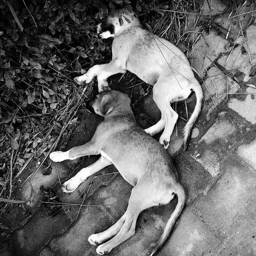 Udhampur Motog4plus Motorola JammuandKashmir Mobilephotography Love Domestic Animals Dog Puppy. Hug Brothers Animal Themes Mammal Scenics Hill. Beauty In Nature Mountain. Katra Smvdu India Incredible Pet Portraits Mix Yourself A Good Time EyeEmNewHere The Week On EyeEm