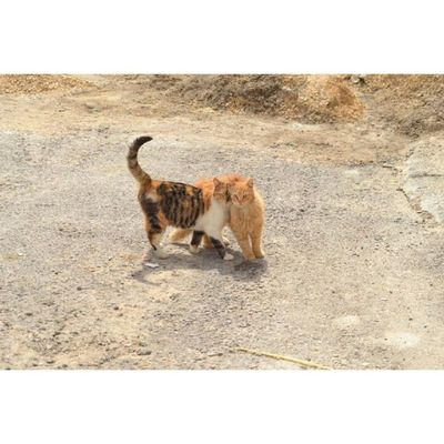 Cat Cats Pet Petstagram nature kitten kittens catstagram cutie pets kitty catlovers catsofinstagram animal sweet hash_stagram life catlover ilovemycat ilovemypet instapets petsagram meow picpets instacat