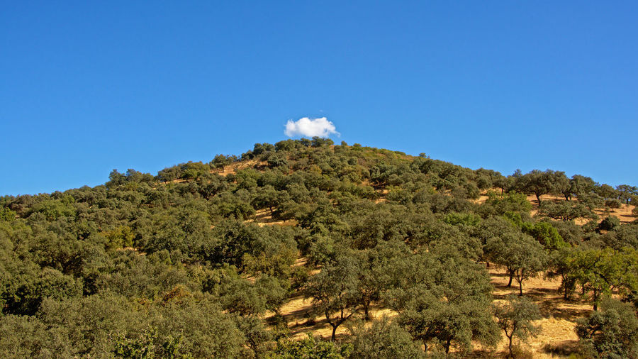 Hill with maquis shrubs on a sunny day with blue sky and one little white fluffy cloud on top in Sierra norte de sevila nature reserve, Andalusia, Spain Andalucía Andalusia Cloud Shrubs Sunny Beauty In Nature Blue Day Environment Hill Land Landscape Maquis Nature No People Outdoors Plant Scenics - Nature Shrubland Sky Sky Blue Summer Tranquil Scene Tranquility Tree