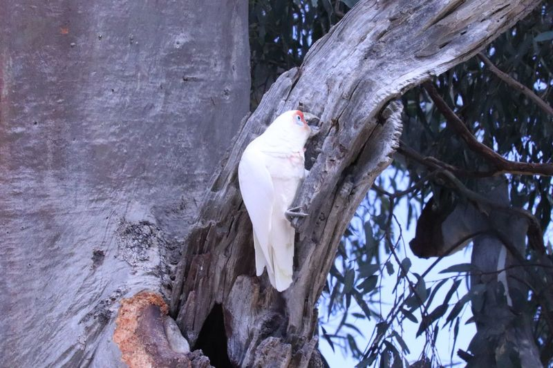 Foraging for food Animal Themes Animal Tree Vertebrate Bird One Animal Animals In The Wild Animal Wildlife No People Perching Day Tree Trunk Trunk White Color Nature Branch Outdoors Parrot