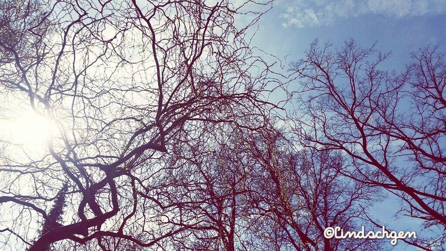 Blick in den Frühlingshimmel. Erste Sonnenstrahlen genießen. Nature Enjoying Life EyeEm Best Shots - Nature Frühling Springtime Beautiful Nature Gartenglück Glücklich ☺️ EyeEm Nature Lover EyeEm Best Shots Sky Porn Sun Light Sonnenstrahlen Frühling 2016 🌾 Frühlingsanfang Tree Trees And Sky