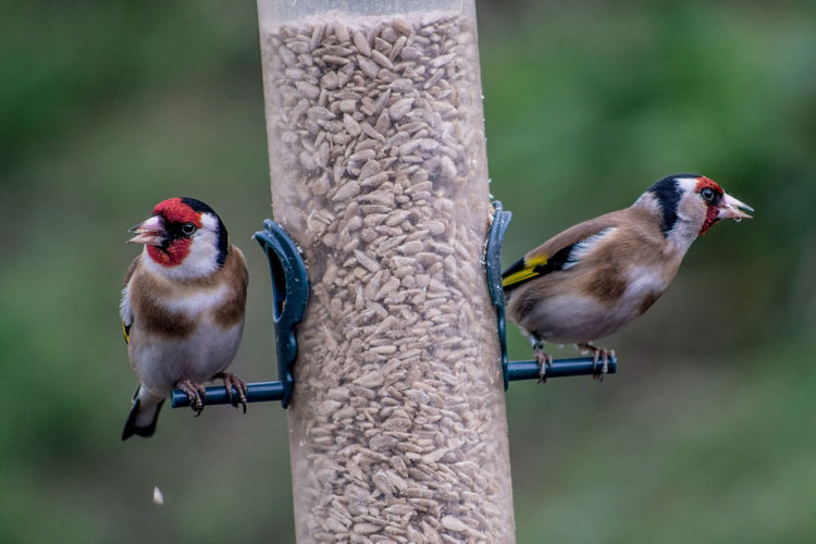 Bird Photography Birds Of EyeEm  Wildlife & Nature Wildlife Photography Animal Animal Themes Animal Wildlife Animals In The Wild Bird Bird Feeder Birds Birds_collection Close-up Focus On Foreground Group Of Animals Hartlepool Perching Seed Two Animals Vertebrate Wildlife