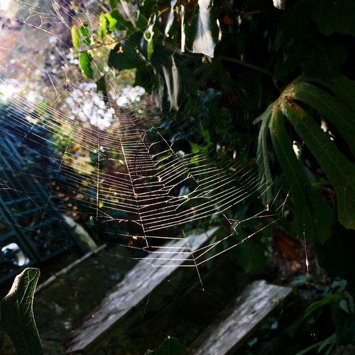 Burgaz Zy Photowalk Çekilebilirleyler Creativity Timeless0012 Spider Web Plant Nature No People Water Growth Fragility Tree Focus On Foreground Beauty In Nature Day Leaf Outdoors