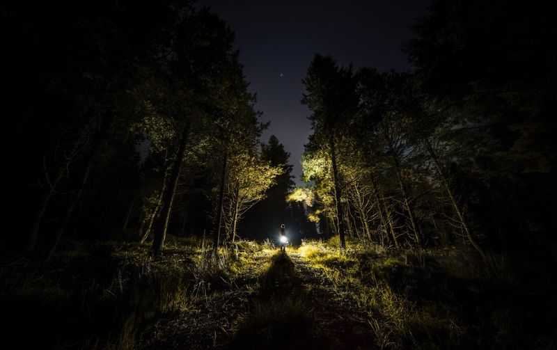 Into the woods. Night Nature Tree Growth Tranquil Scene Outdoors Tranquility Forest Beauty In Nature Illuminated Sky Landscape Scenics Grass Dark Self Wide Angle Pine Light Backlight Backlit Peak District  Tall Shadows First Eyeem Photo