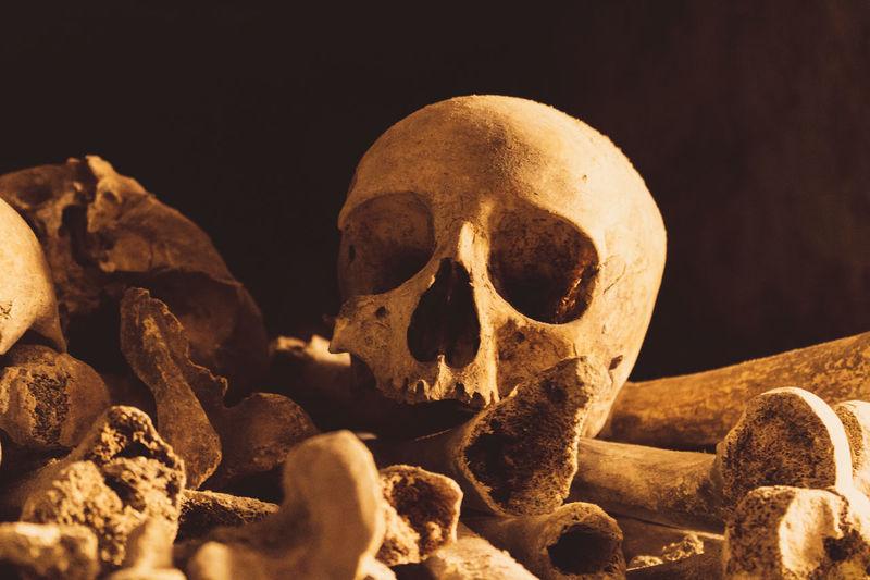 Close-up of human skull and bones