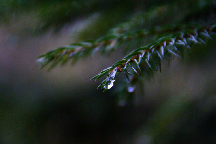 Close-Up Of Wet Plant During Winter