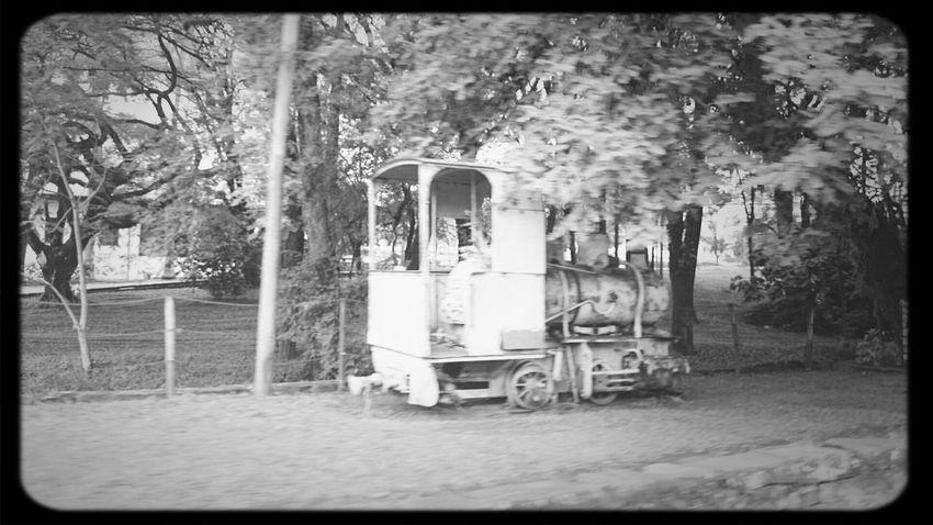 Old Train D.Pedro