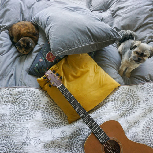 Cat,  dog and gitar on bed
