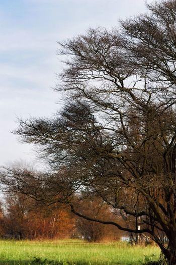 Landscape_Collection Orton Effect Autumn