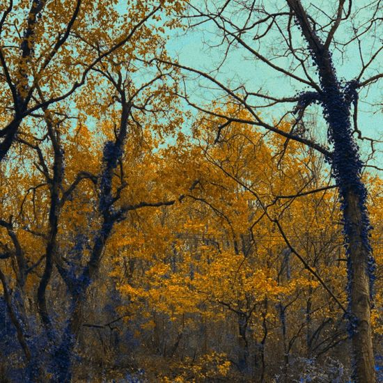 Winter Coming Bare Trees Orange Leaves Autumn Tree Change Leaf Nature Beauty In Nature No People
