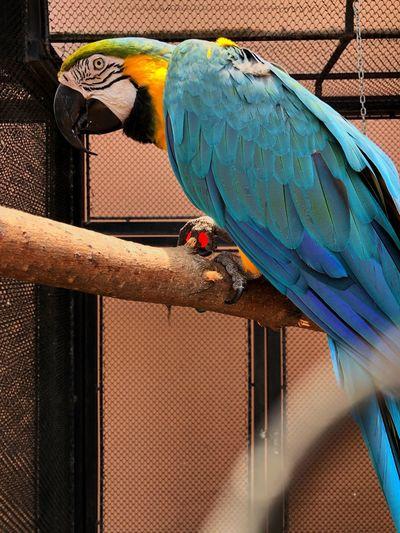 Animal Vertebrate Animal Themes Bird Day No People