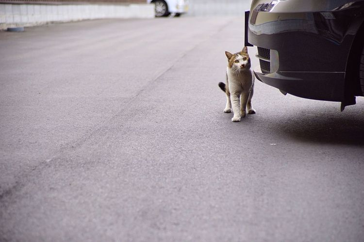 Cat Japan Onomichi Japanese Cat Cute Kot Animals Cats Kitten Kitty Kittens Pet Pets Animal Lovemycat Lovecats Lovekittens Cat♡ Cat Lovers Cats Of EyeEm Cat Watching
