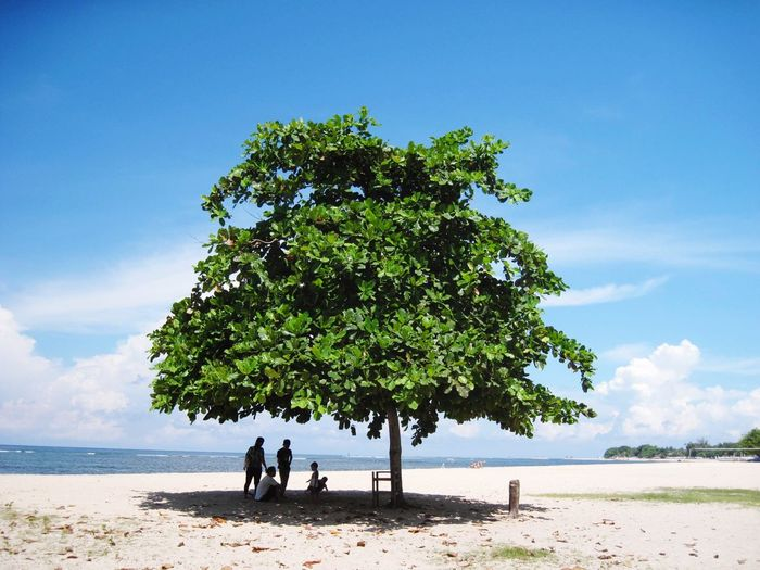 People under tree shade at jimbaran beach