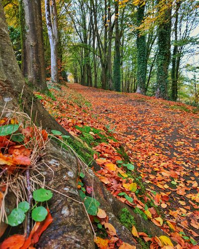 Leaf Autumn Nature Tree Forest Change Growth Day Outdoors Tree Trunk Plant No People WoodLand Beauty In Nature Branch Scenics Freshness Close-up