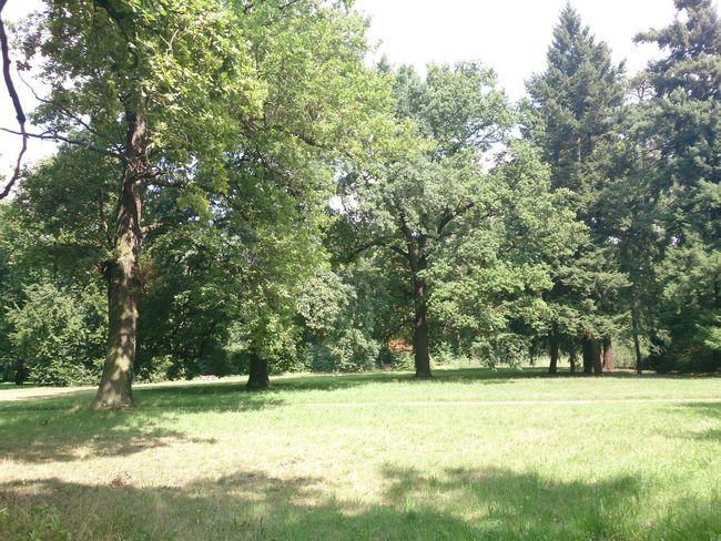 Un Bosque que hay en la Ciudad De Potsdam que esta en Berlin