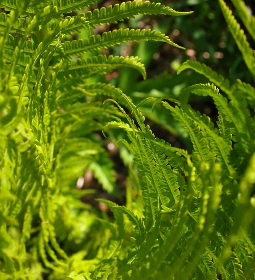 Beauty In Nature Center Focus Close-up Day Ferns Freshness Full Frame Green Color Growth Leaf Nature Nature On Your Doorstep Nature_collection Nature_perfection No People Outdoors Plant Selective Focus The Great Outdoors - 2017 EyeEm Awards