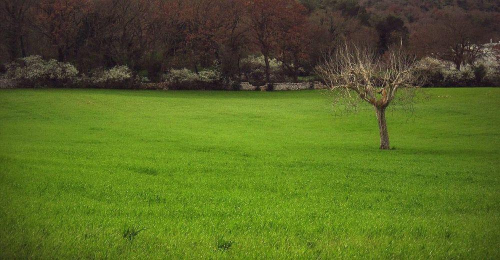 Solitudine Foglie Arancio Foglie Porpora Prato Verde Verde Speranza Alberello Solitario Natural Beauty Landscape_photography