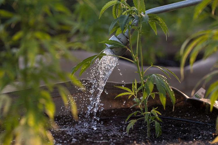Close-up of water splashing on plant