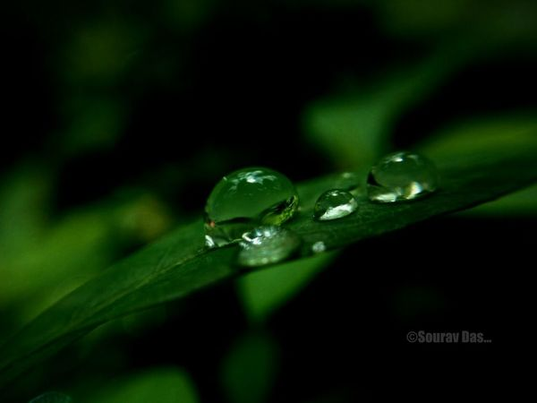 Raindrops Rain Drops On Leaves Drop Green Color Nature Close-up Leaf No People Beauty In Nature Freshness Plant Water Fragility Day Outdoors Splashing Droplet Animal Themes Nature Beauty In Nature Macro Photography EyeEm Team Likeforlikers Colours Of India Likes4likes