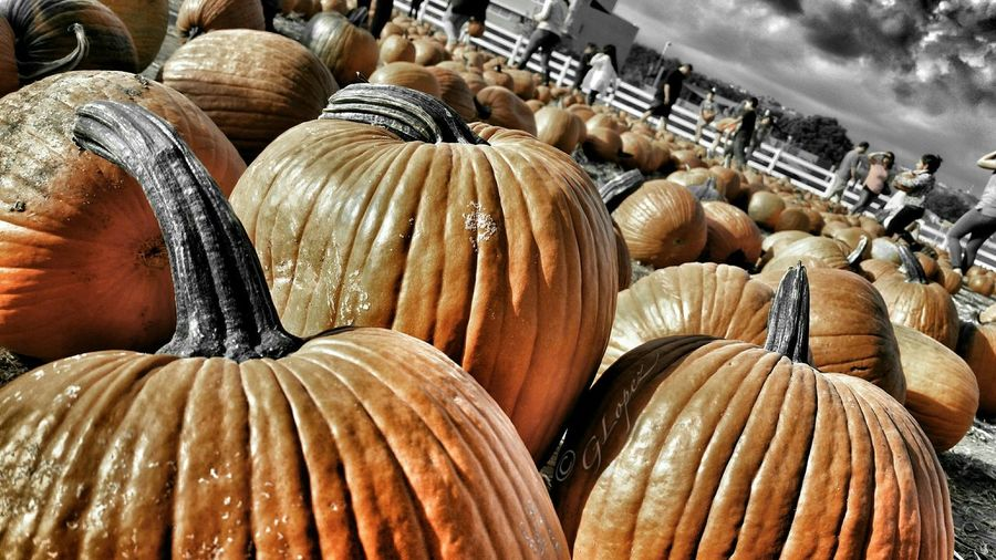 Pumpkinpatch Pumpkinpicking EyeEm Nature Lover EyeEm Best Shots - Nature Halloweentime Streamzoofamily Taking Photos Hanging Out