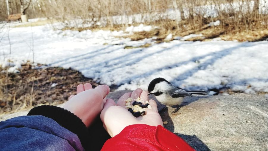 Sharing with a little miracle Feeding  Bird Sharing  Red Dirds Love Human Hand Low Section Water Nail Polish Beach Human Leg Sand Personal Perspective Women Close-up Snow Winter